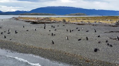 Penguin Island, Beagle Channel, Argentina