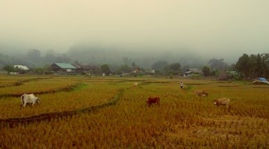 Countryside in the Fog, Pai, Thailand
